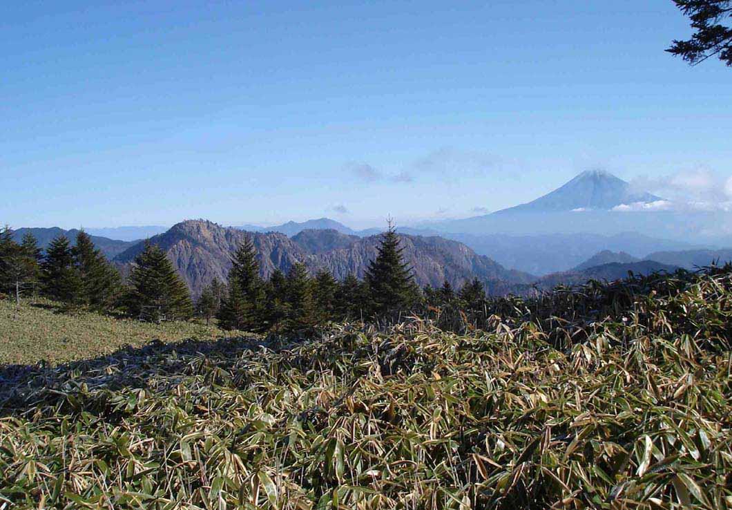山伏頂上直下の笹原から富士山