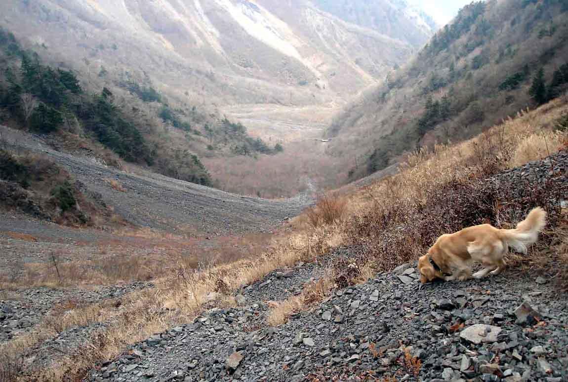 大谷崩れ上部の下降