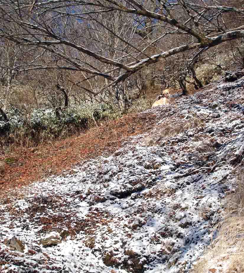 八紘嶺への道