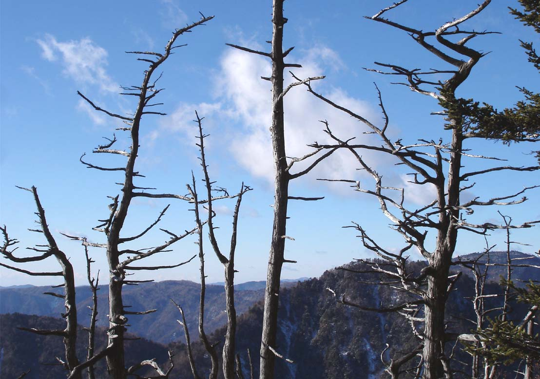 八紘嶺最終登り途中にて(奇樹)