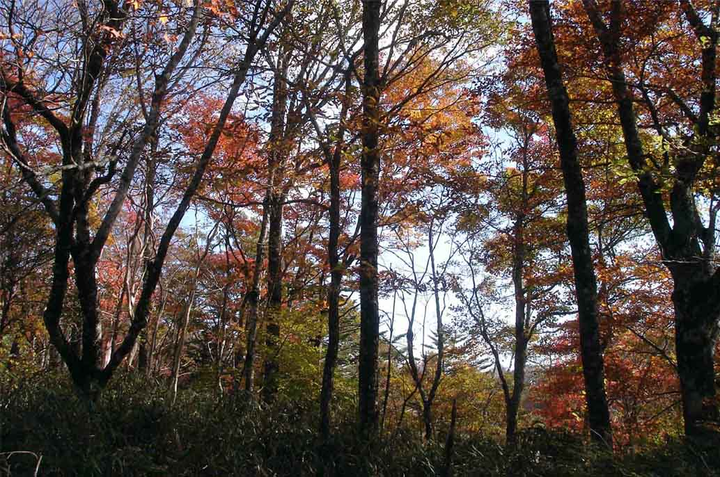 DSC01474 紅葉と笹尾根