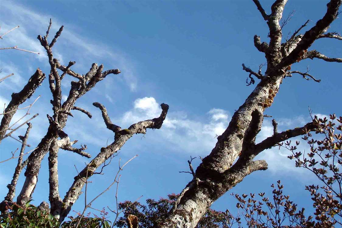 DSC01549 1610mピーク付近の枯樹