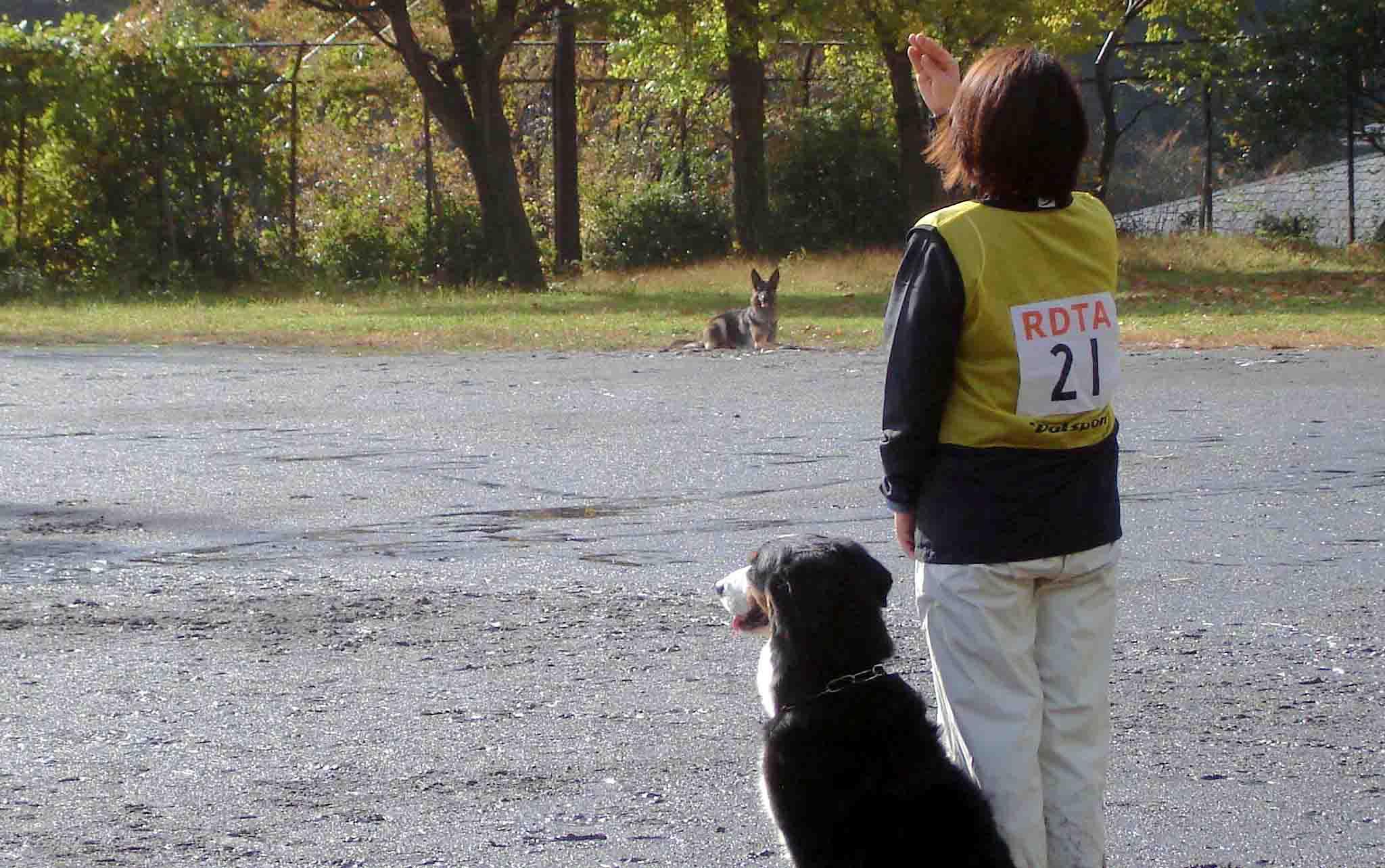 バーニーズの持来と休止中の犬