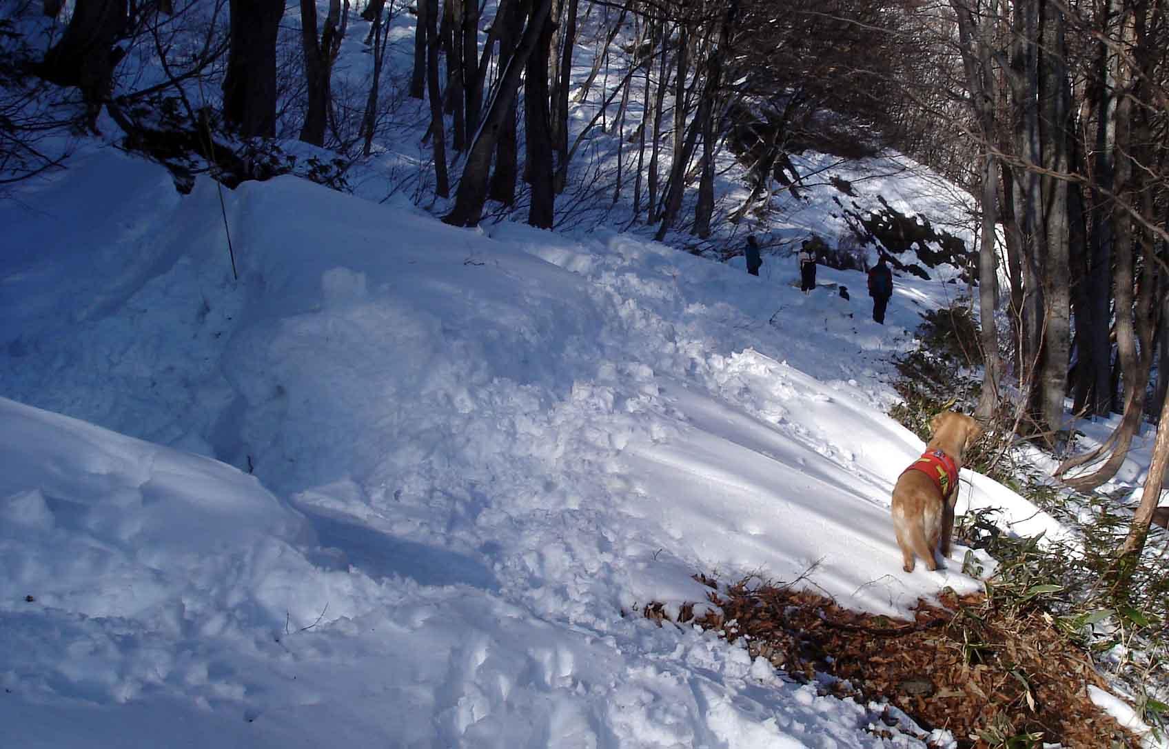 初めての雪中捜索Ⅳでやや難しい?DSC03563