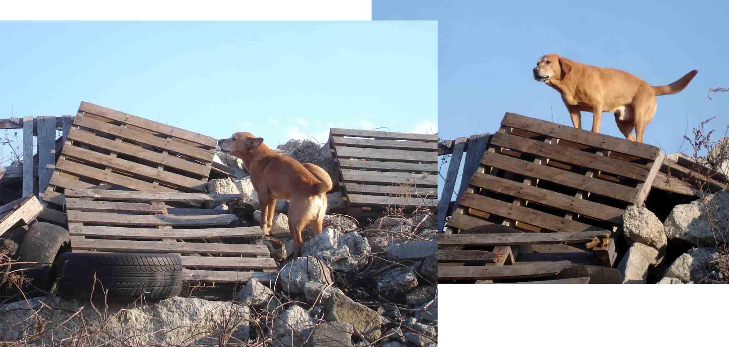 Lリベロの瓦礫捜索訓練