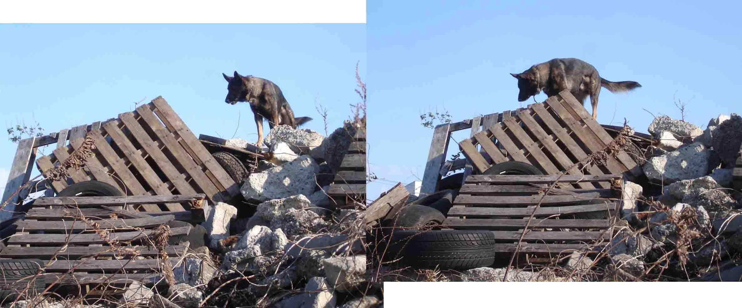 Sエースの瓦礫捜索訓練
