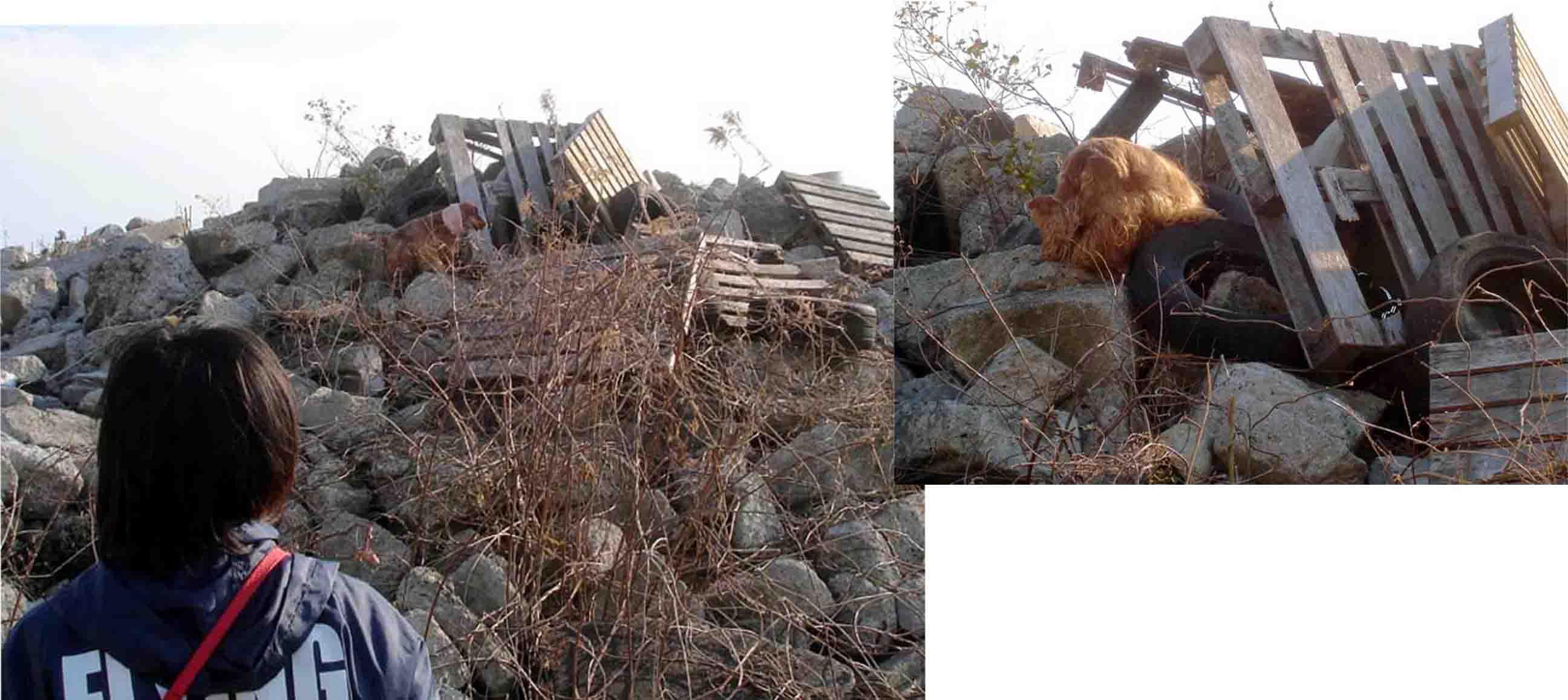 Eコッカホリーの瓦礫捜索訓練