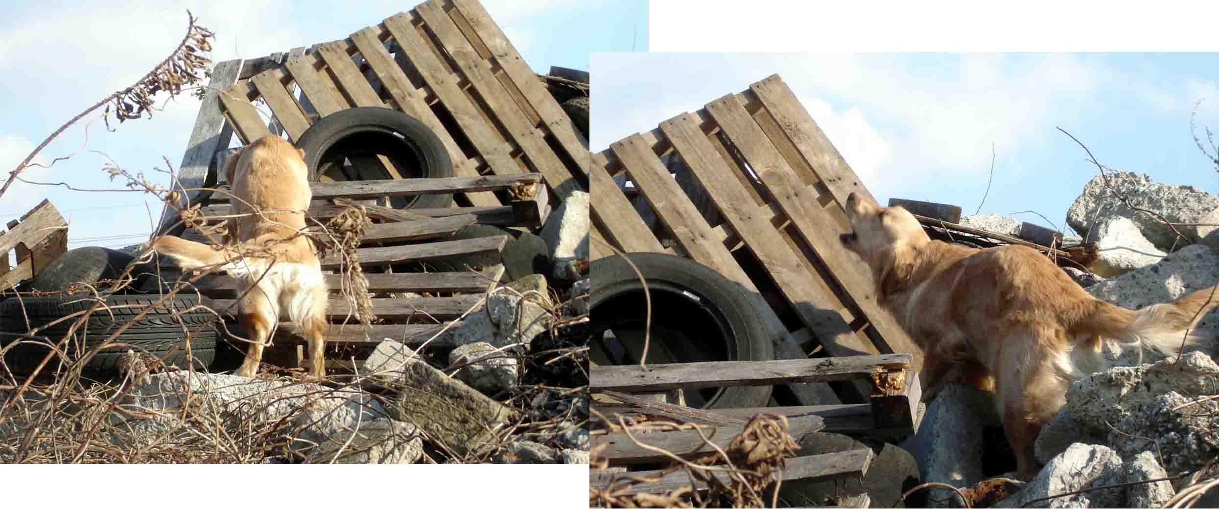 Gモニカの瓦礫捜索訓練