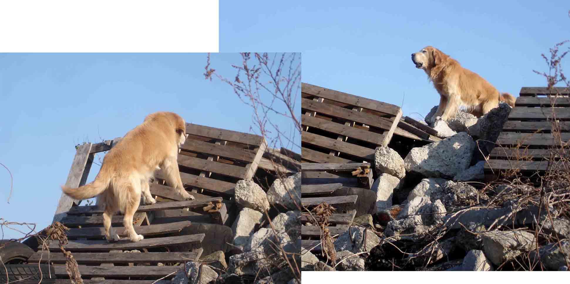 Gサンディの瓦礫捜索訓練