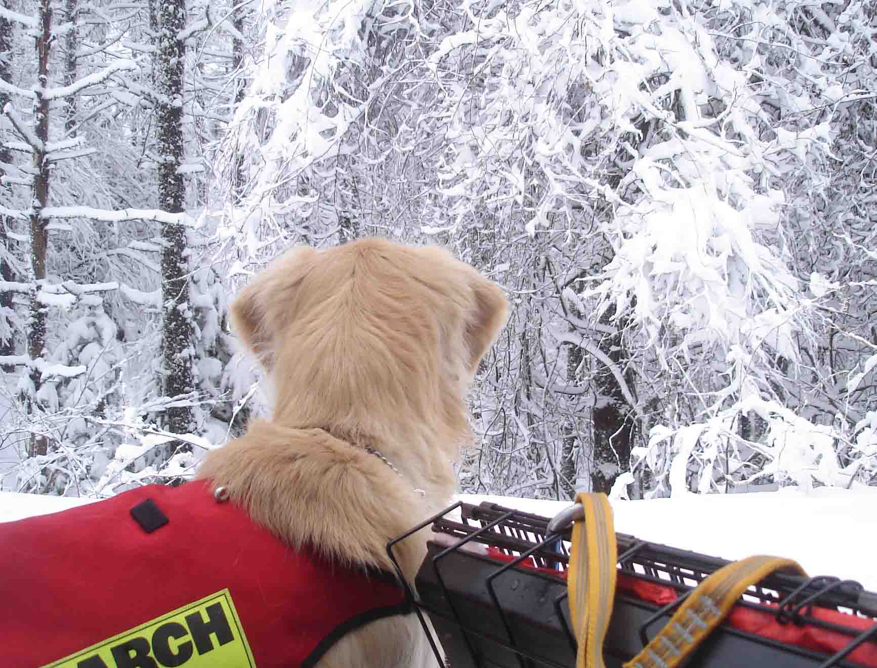 チャンス 白い雪景色を背景に②