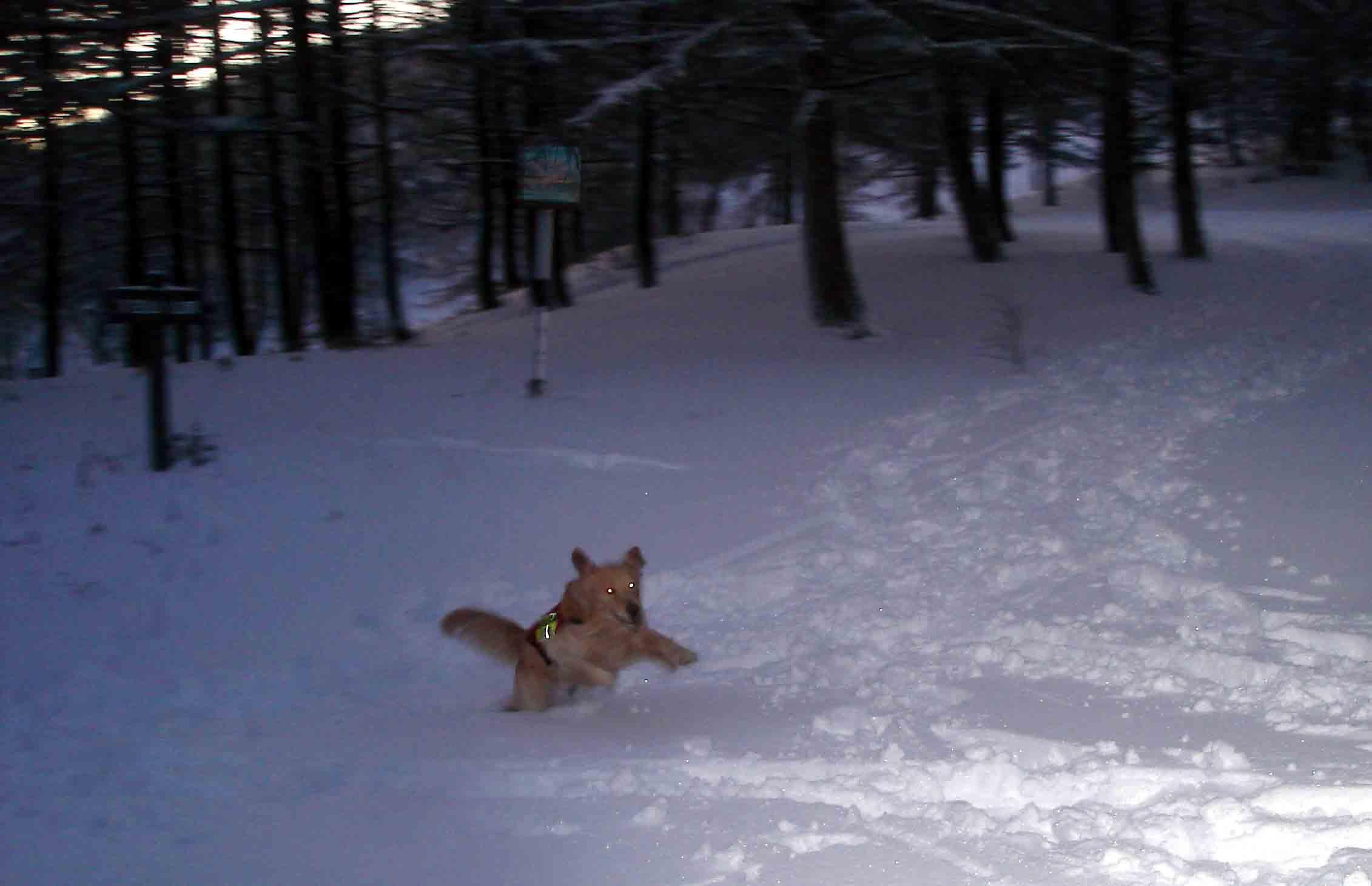 夜明け前の雪面疾走