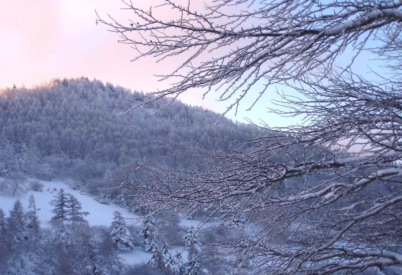 凍る樹皮と入笠山