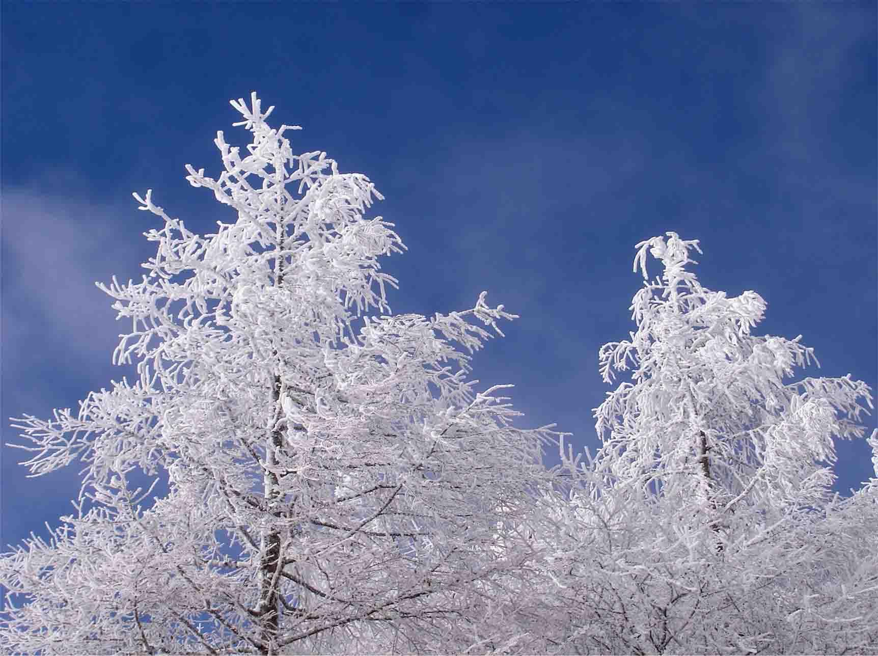 青空に浮かぶホワイトツリー