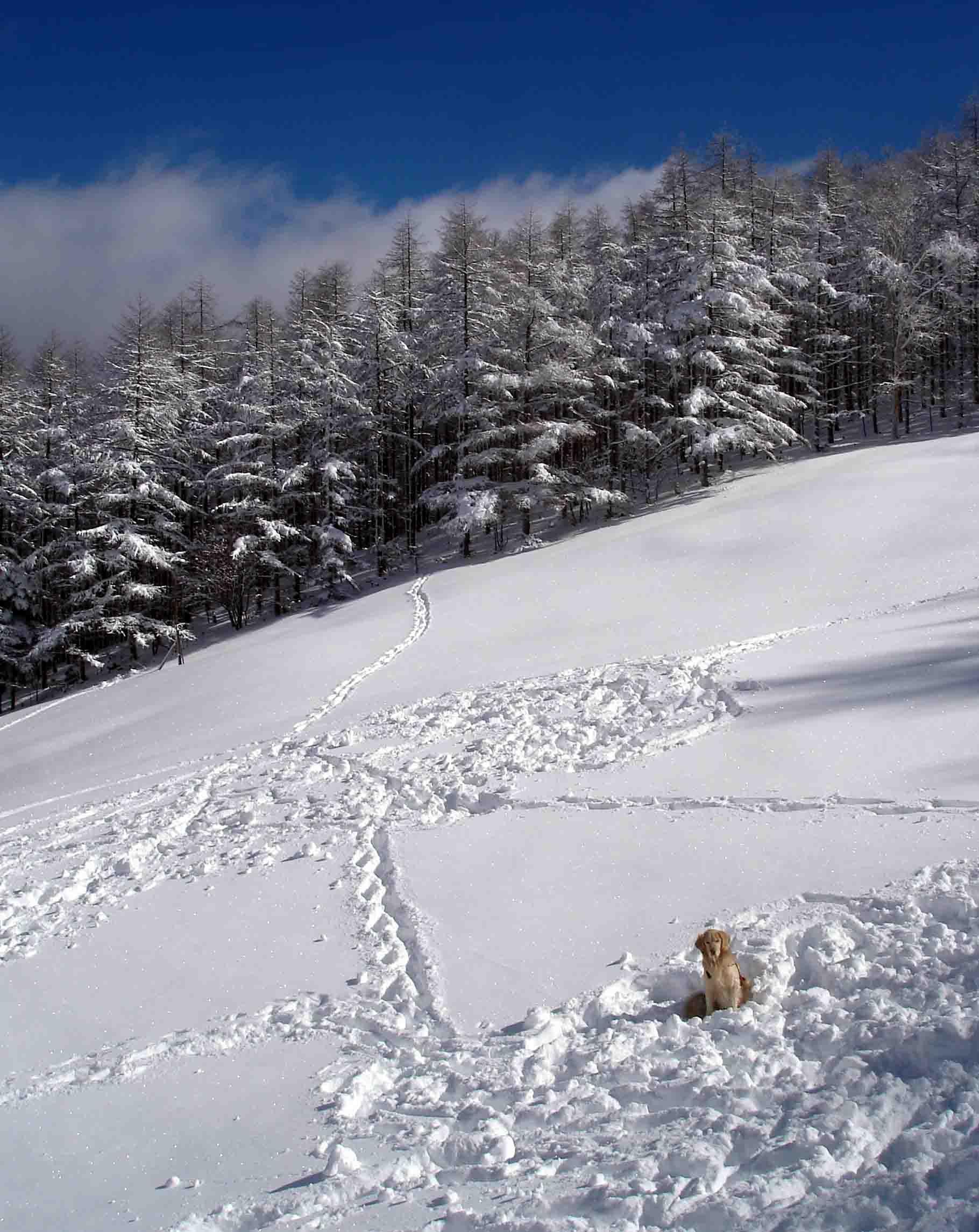 再び…雪上待機