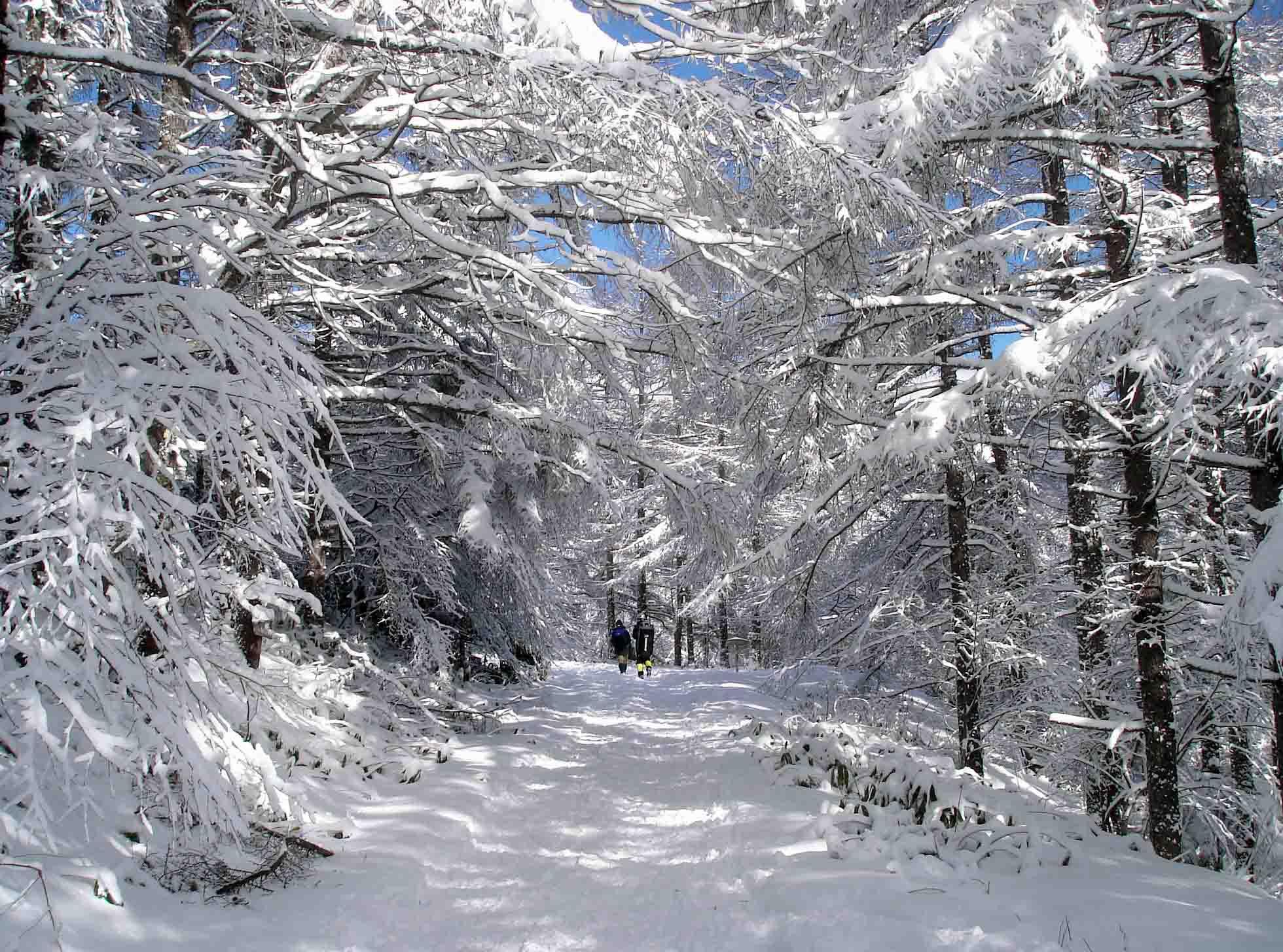 一瞬、陽が差して美しき雪の道