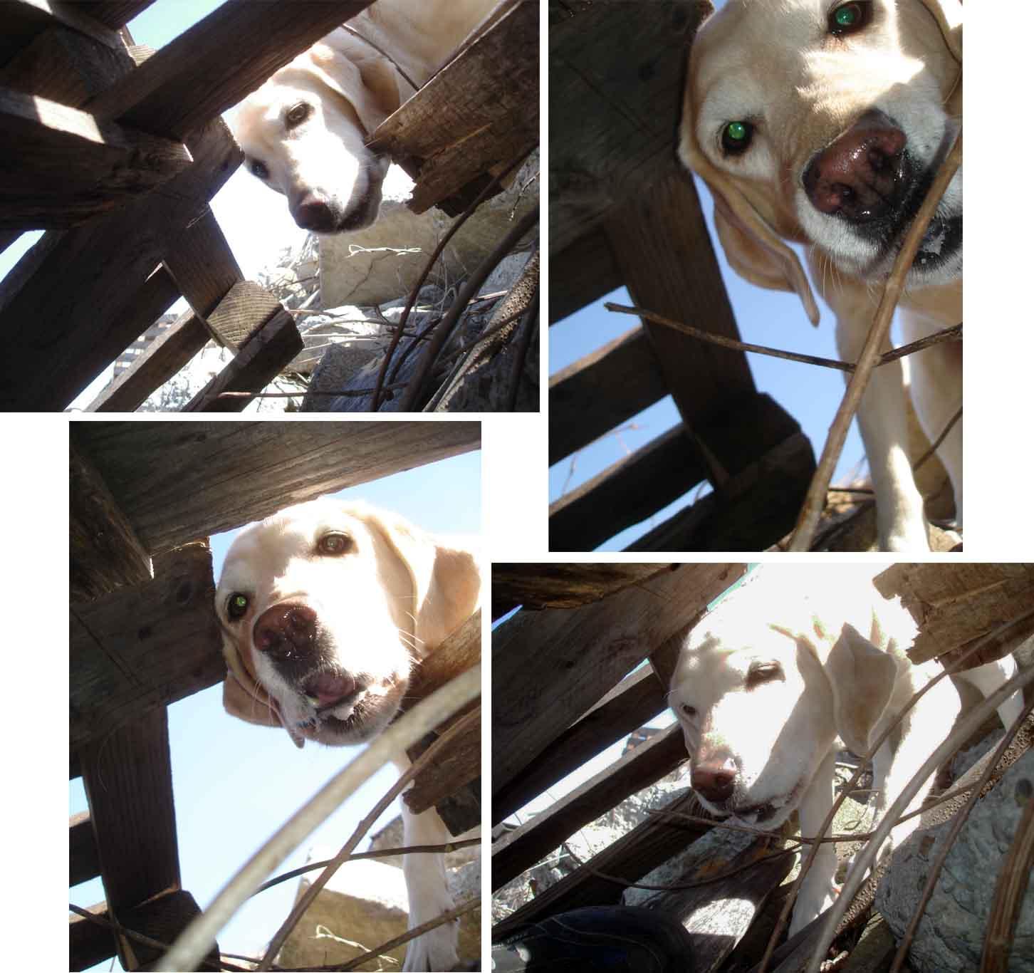 L犬の告知表情①