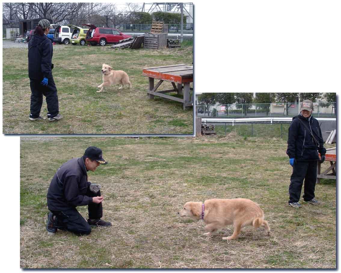 新G犬の「人慣れ」①