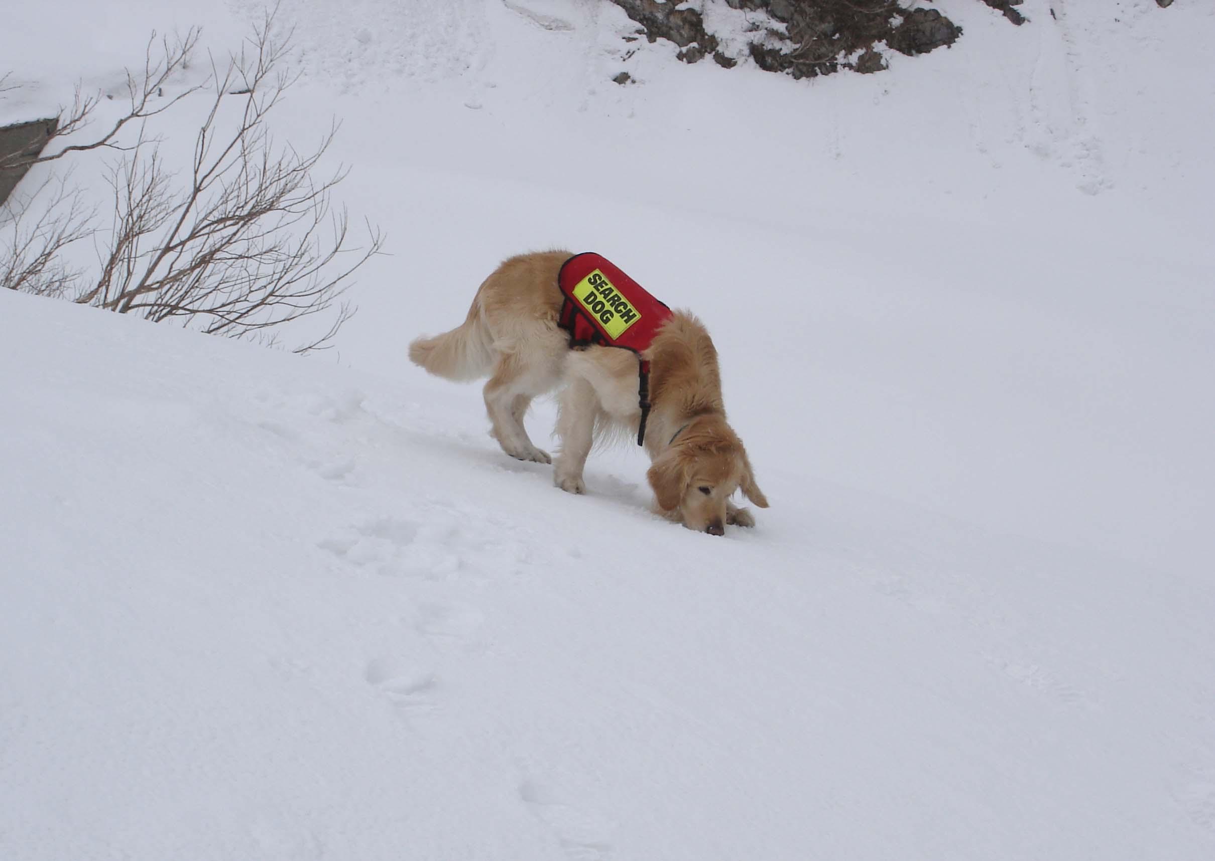 チャンス雪面捜索模様 DSC08830