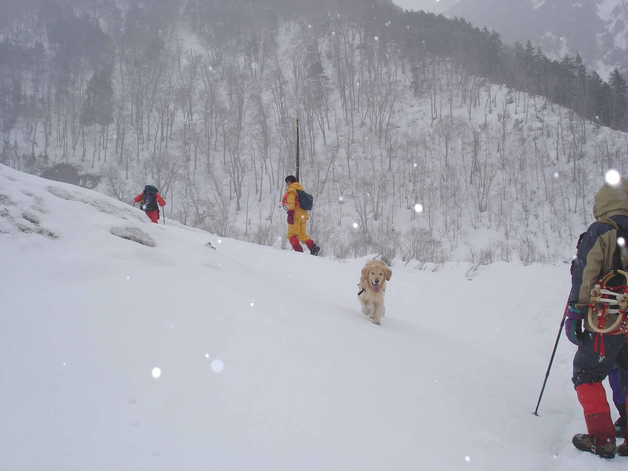 デブリ横断(小雪ちらつく) DSC08794