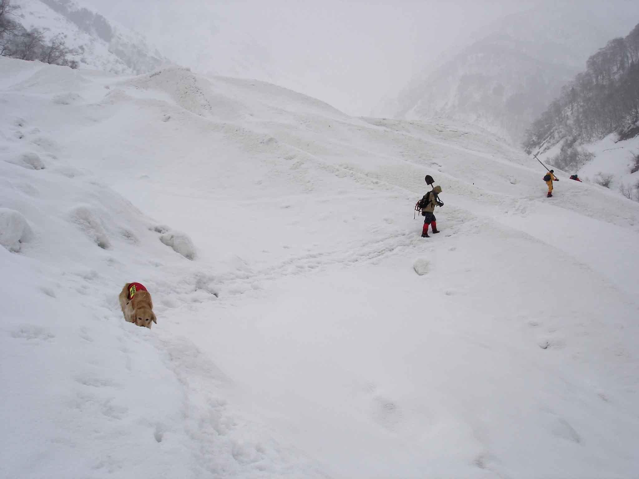 デブリ横断(小雪ちらつく) DSC08800
