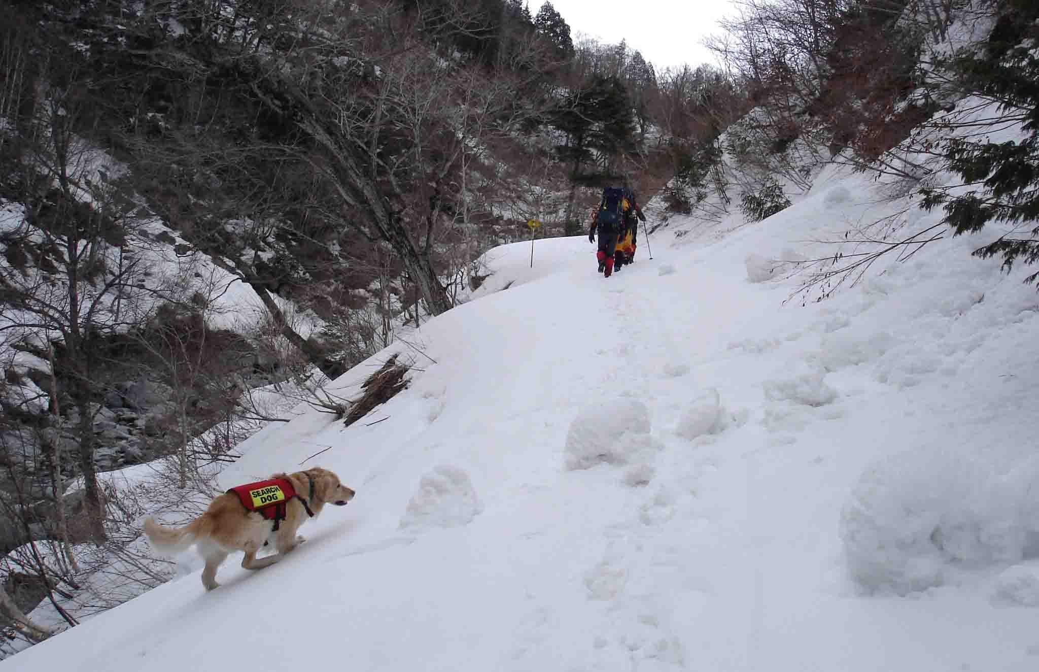 林道も所々雪の斜面に DSC08719