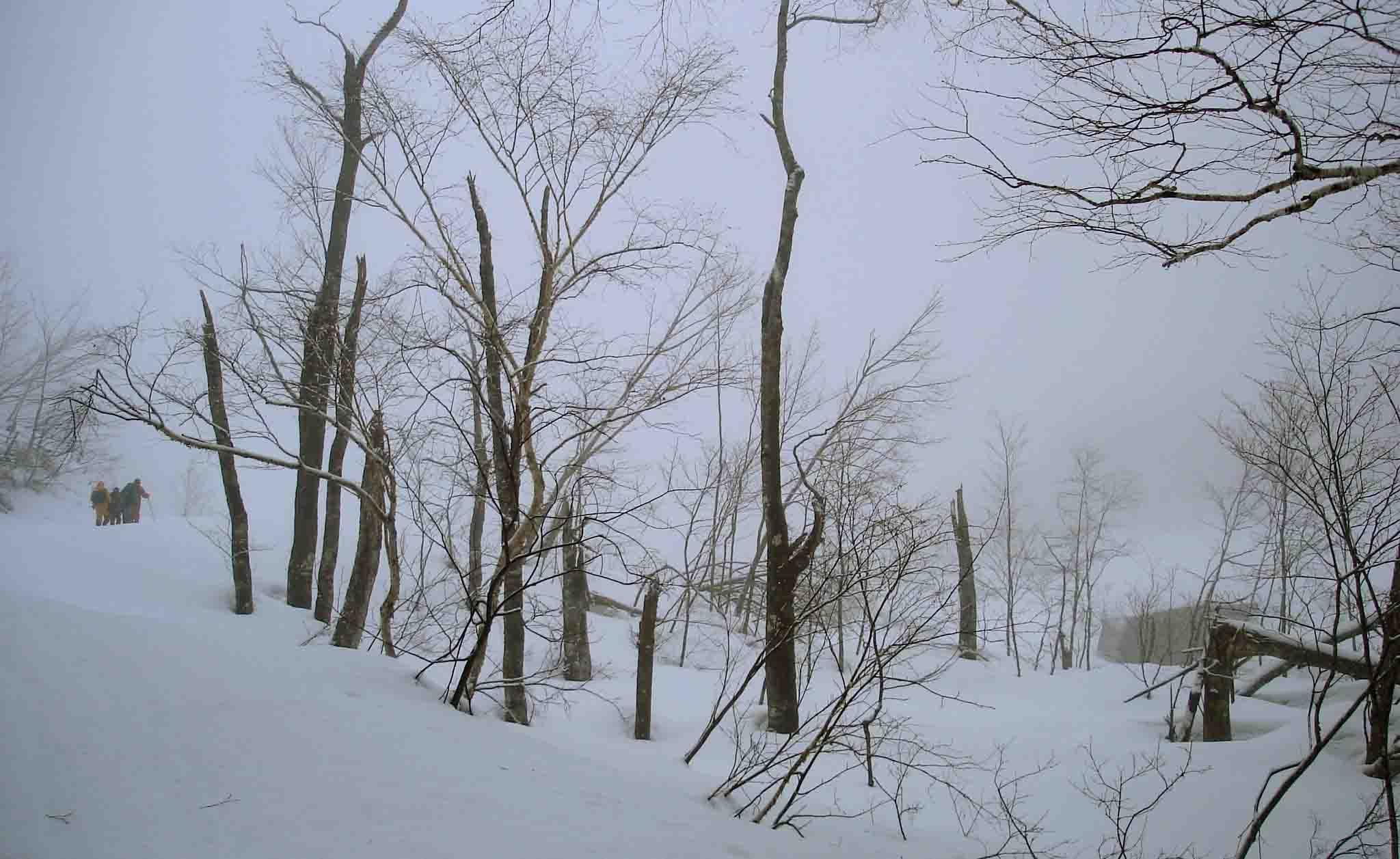 DSC08911 5日の現場へ 雪崩被害の樹木