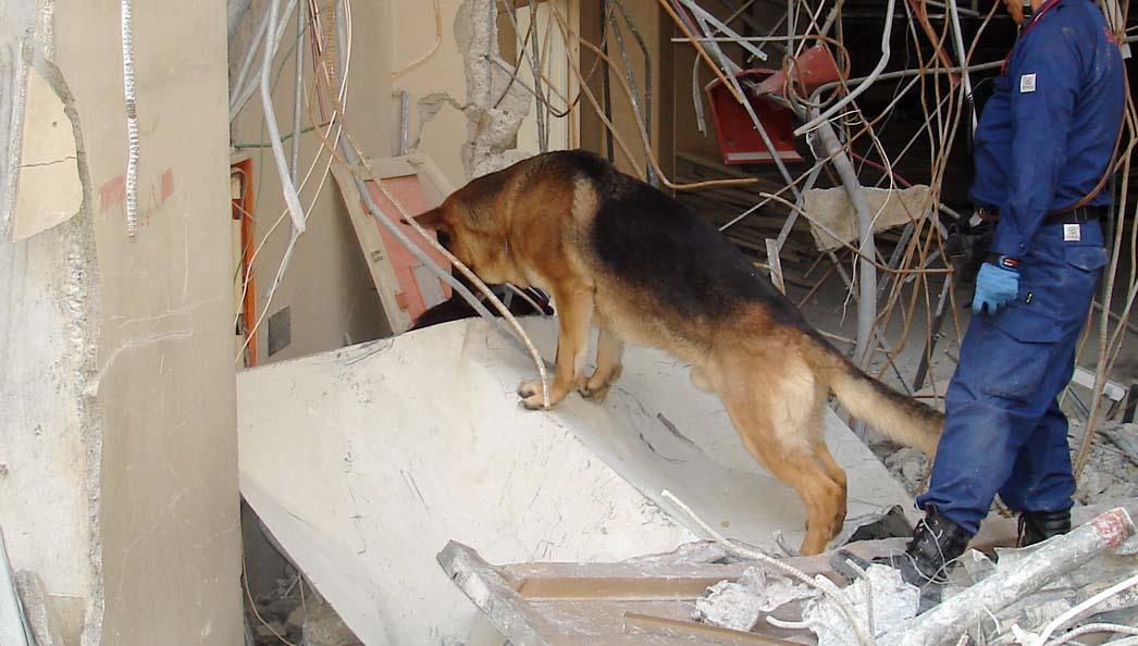 午後の訓練 これからの犬(GS)