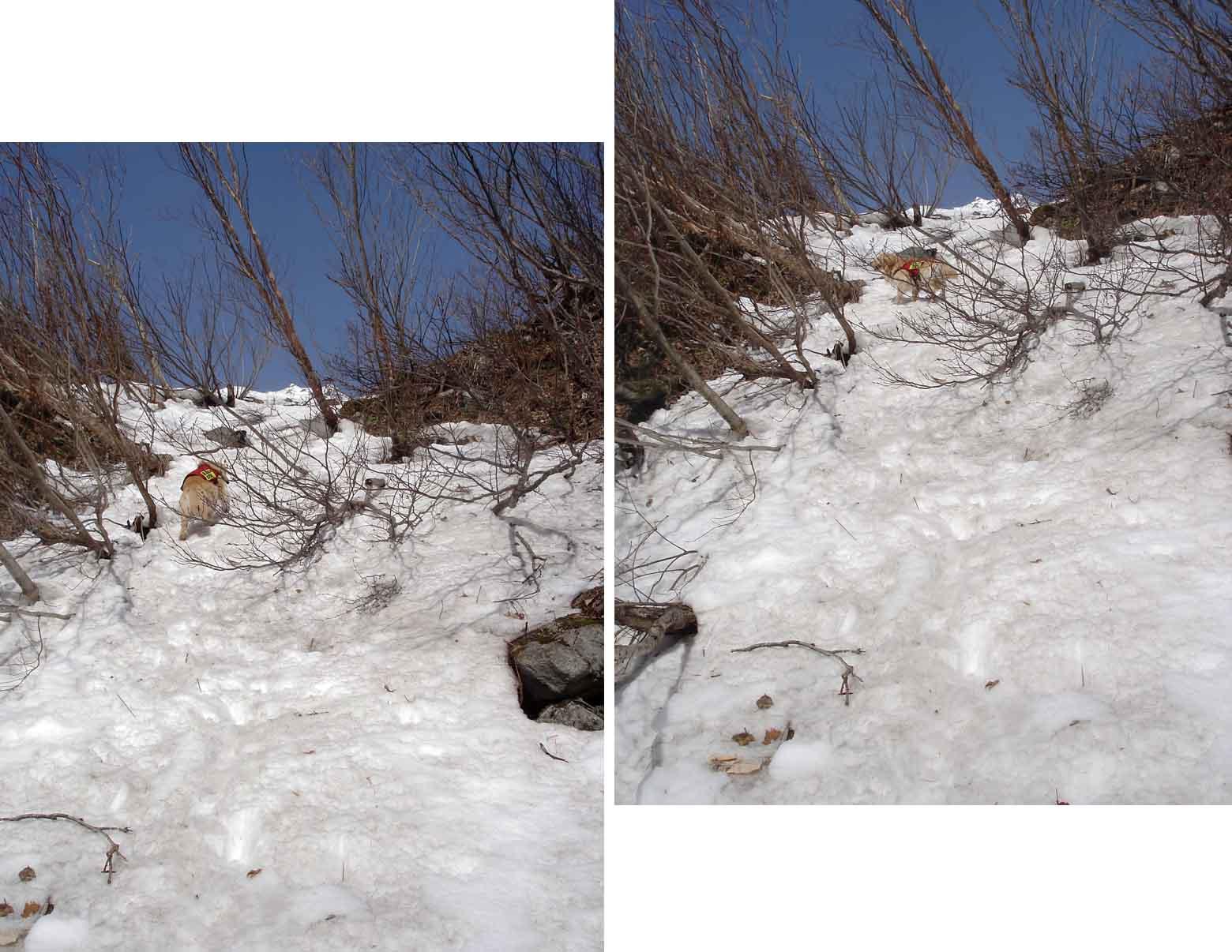 雪壁を登りながら・・・何かを気にする