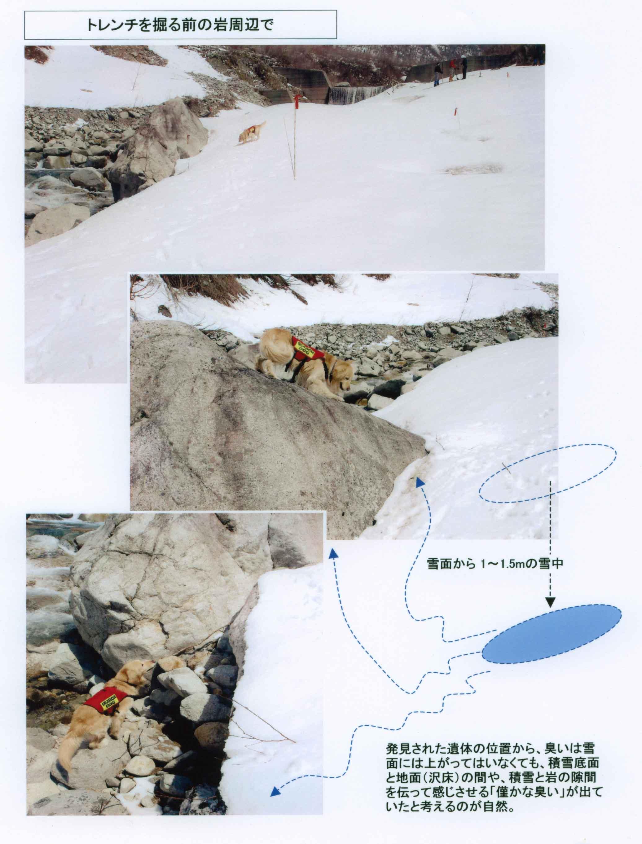 トレンチを掘る前の岩周辺で