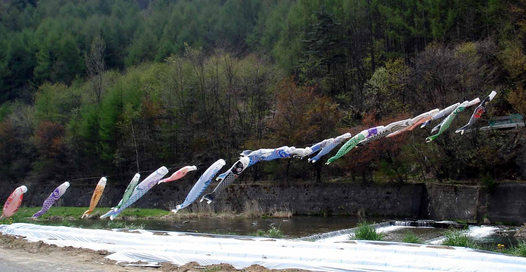 千曲川を泳ぐ鯉のぼり