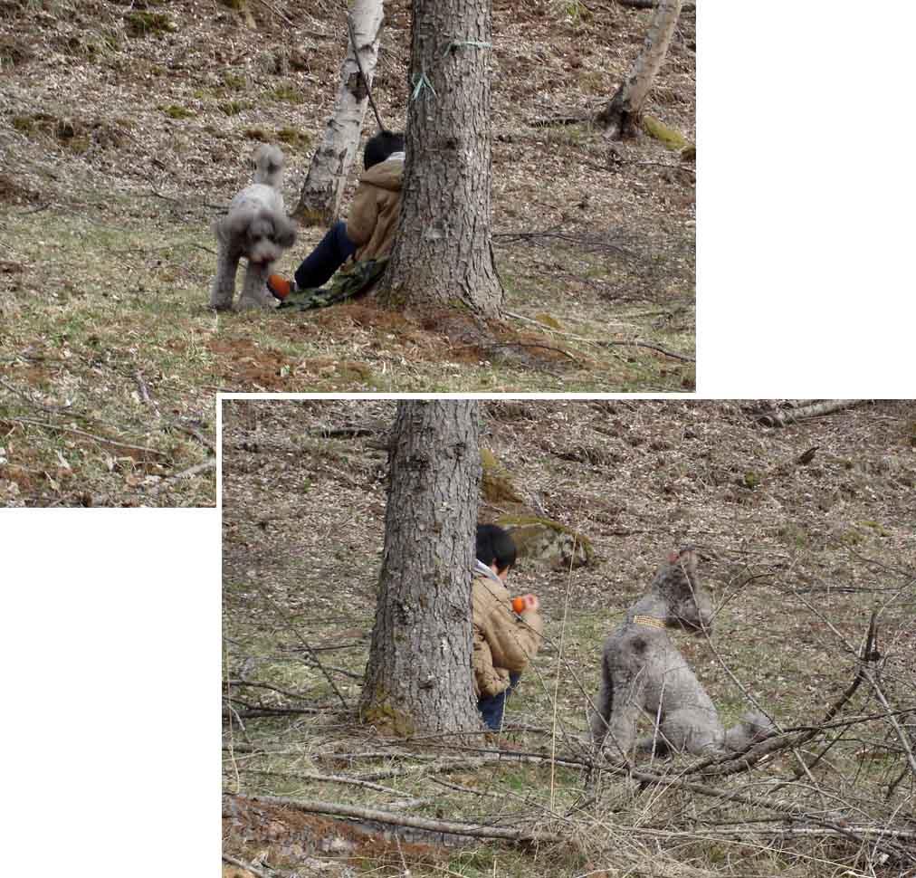 初級犬の基礎訓練(SP)