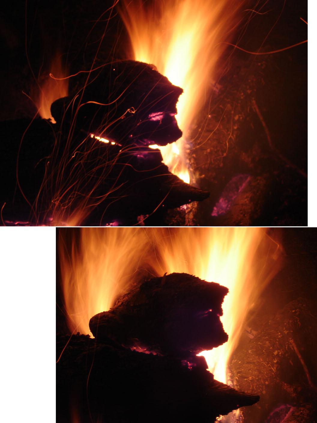 4日夜 焚き火犬