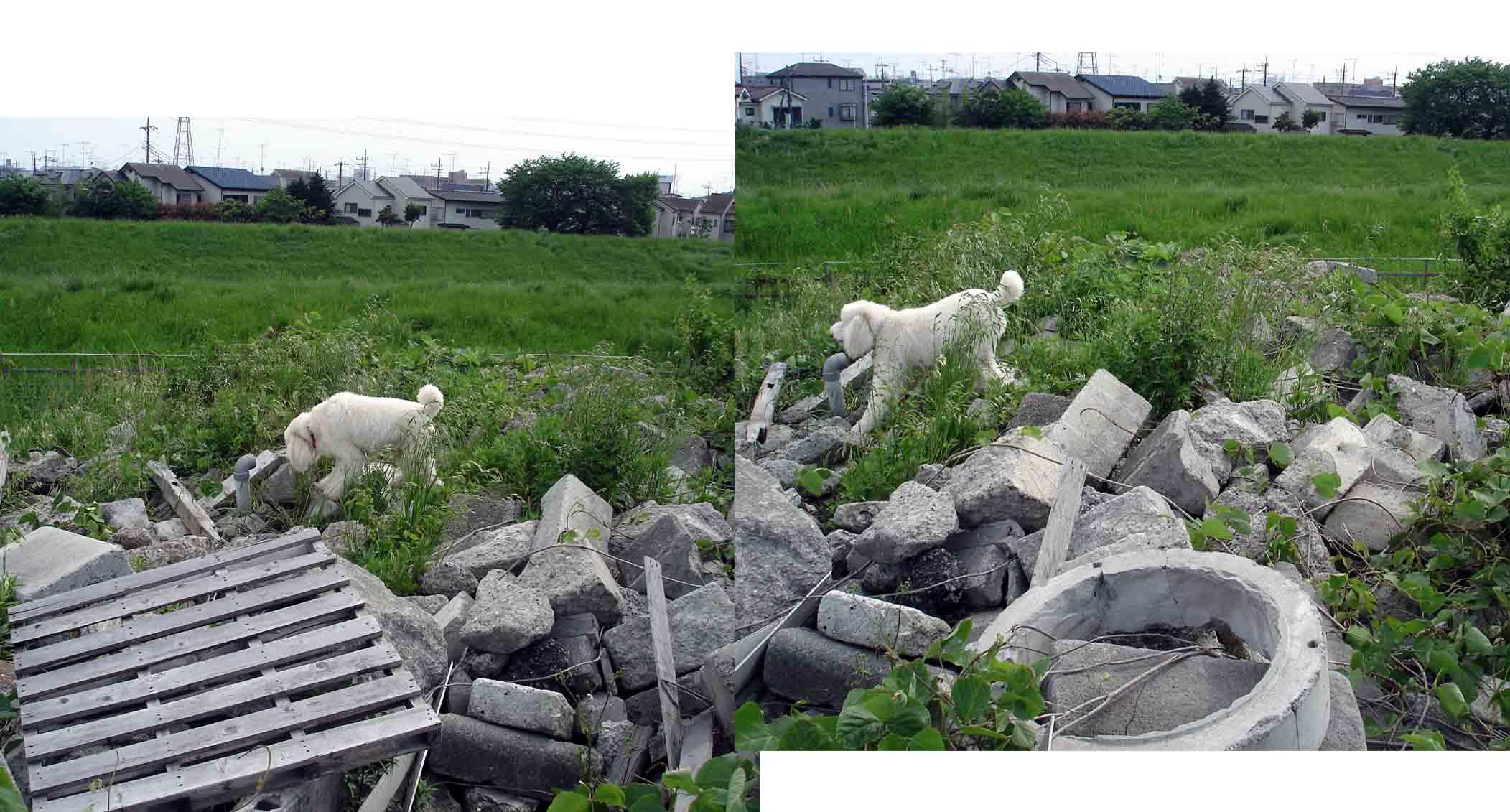 0510 SPK 瓦礫上の捜索