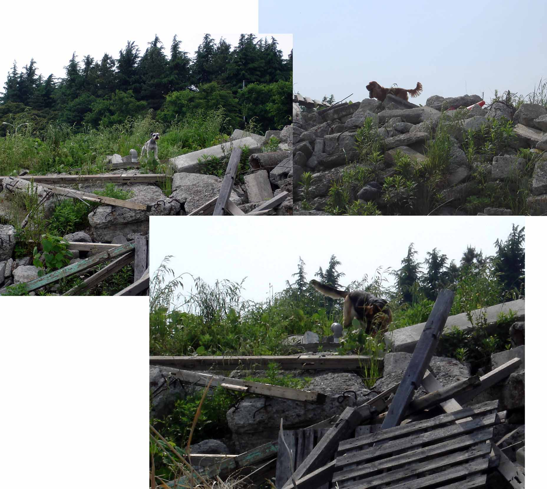 0510 MST,ECS,GS 瓦礫上の捜索