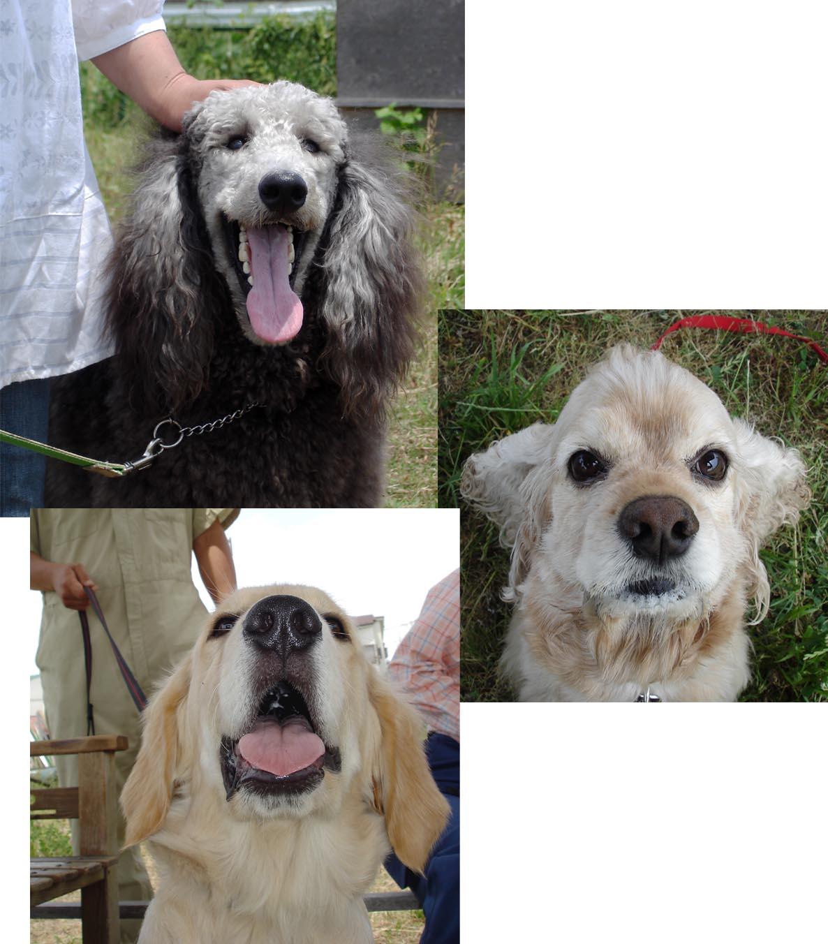 犬の肖像 SPM,ACPM,GRP