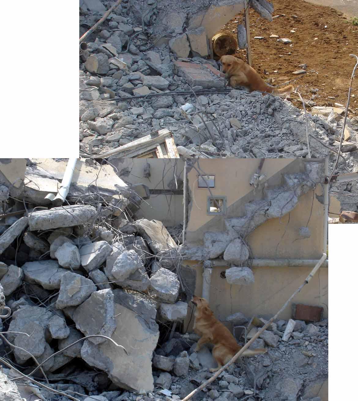 午後の捜索⑩ 瓦礫模様 GRM(発見咆哮)