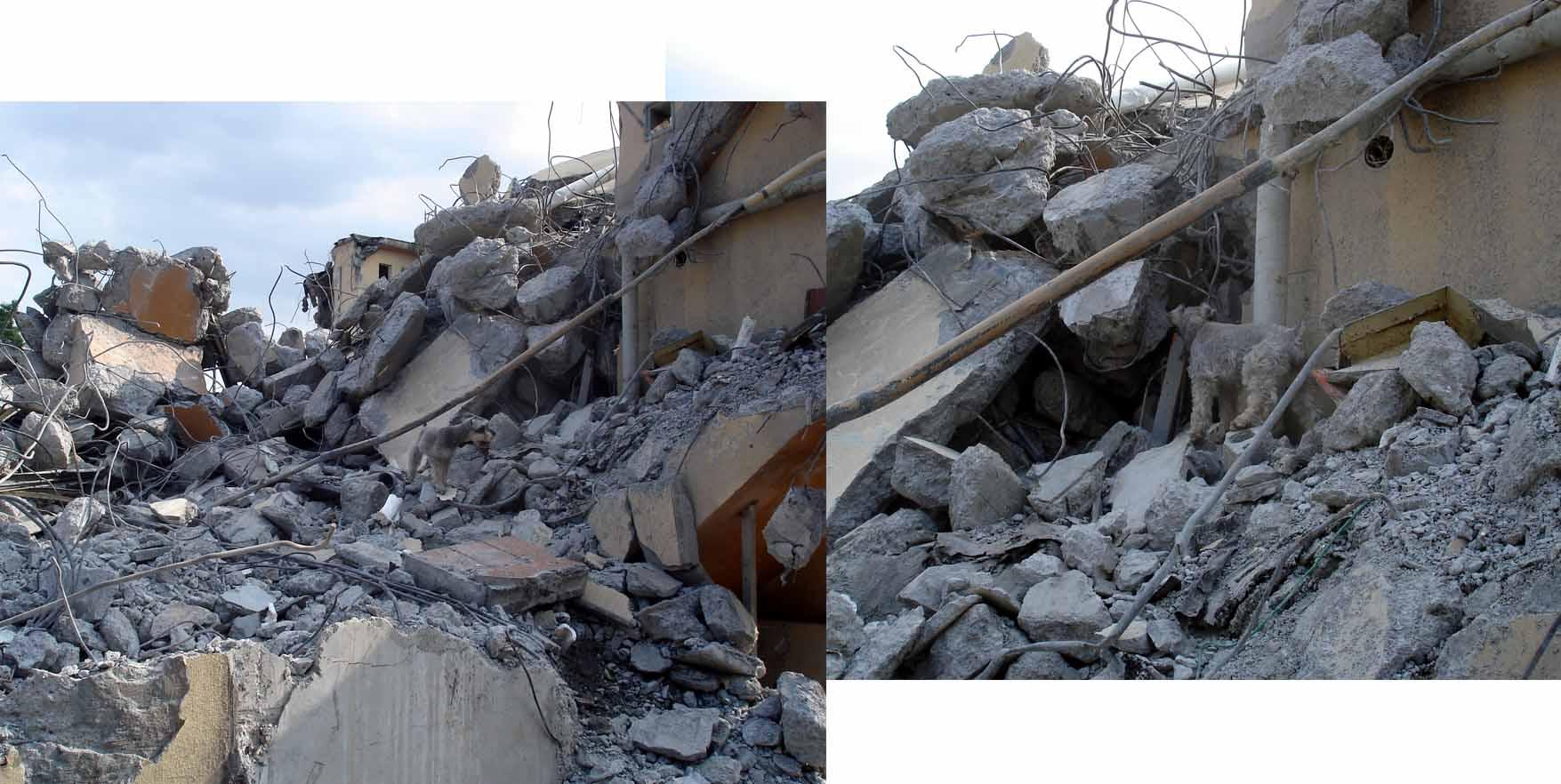 午後の捜索⑪ 瓦礫裏で MST