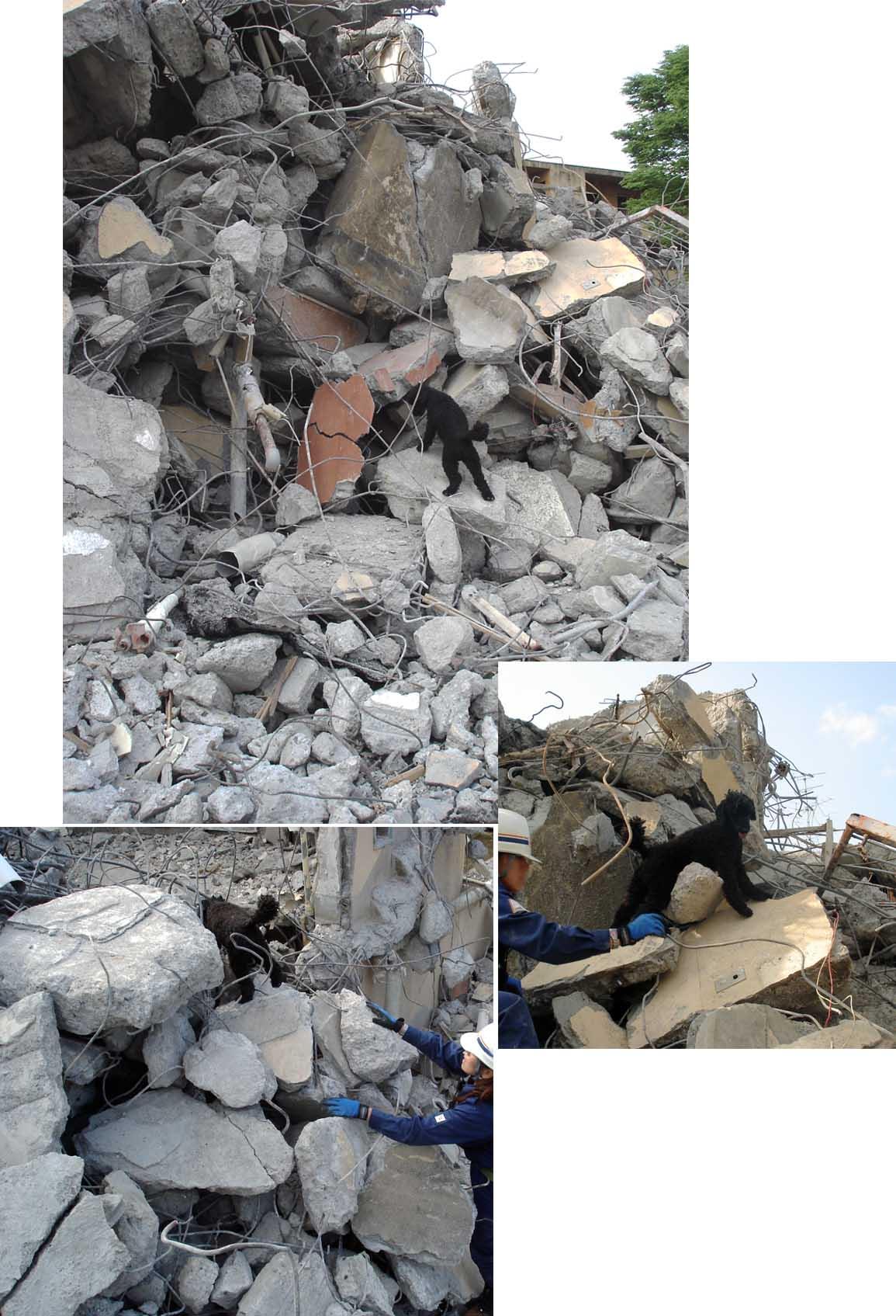 午後の捜索⑲ MPTの瓦礫模様