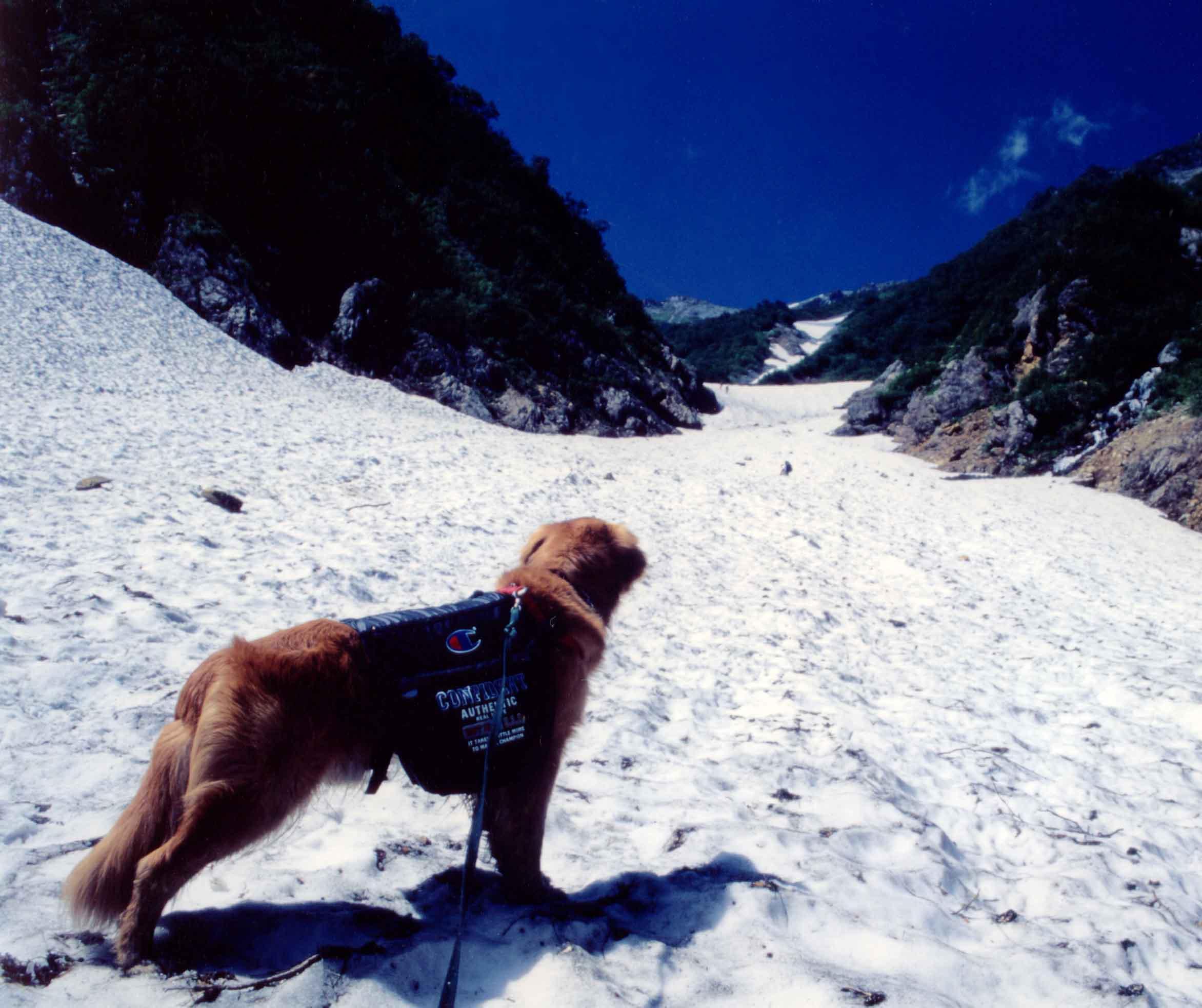 1997.7 針の木雪渓