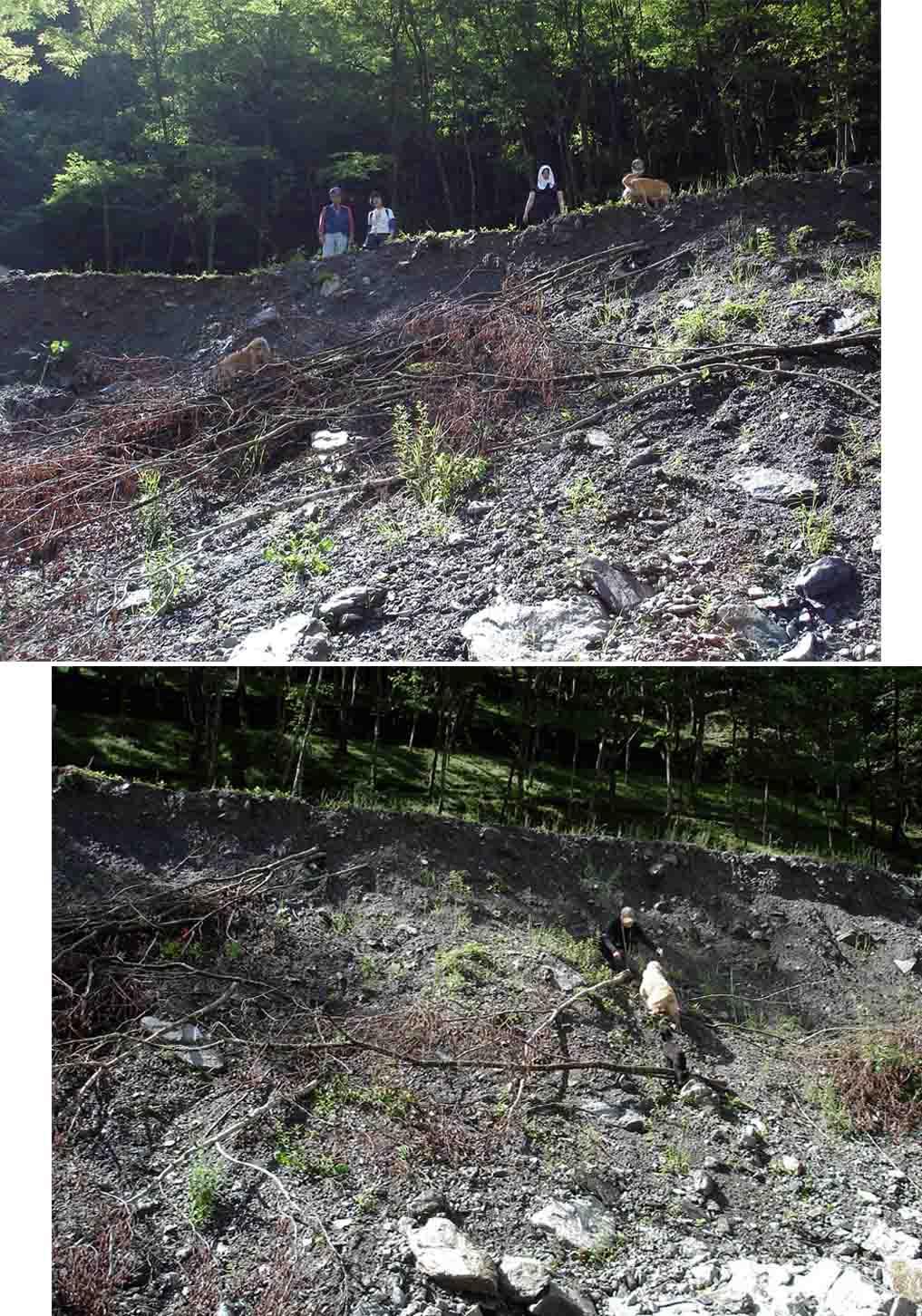 三峰川林道⑧ 未体験ゾーン(崖を降りたり登ったり)