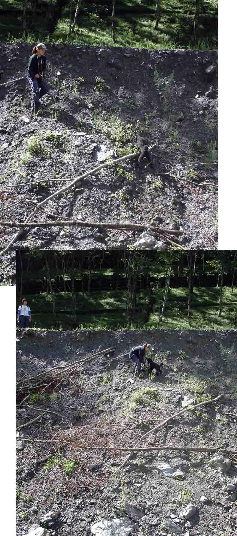 三峰川林道⑨ 未体験ゾーン(崖を降りたり登ったり)