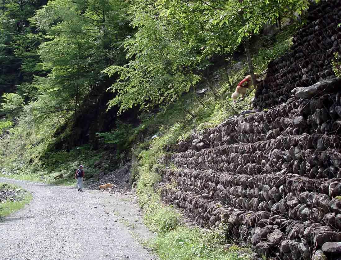 三峰川林道⑩ 自然の中で(登れ・前へ)