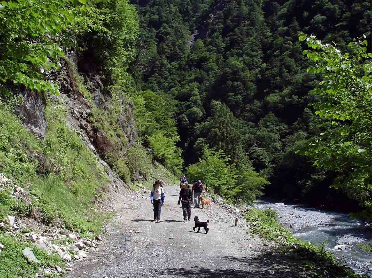 三峰川林道⑪ 奥へ奥へ