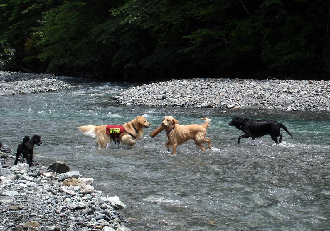 三峰川川遊び④