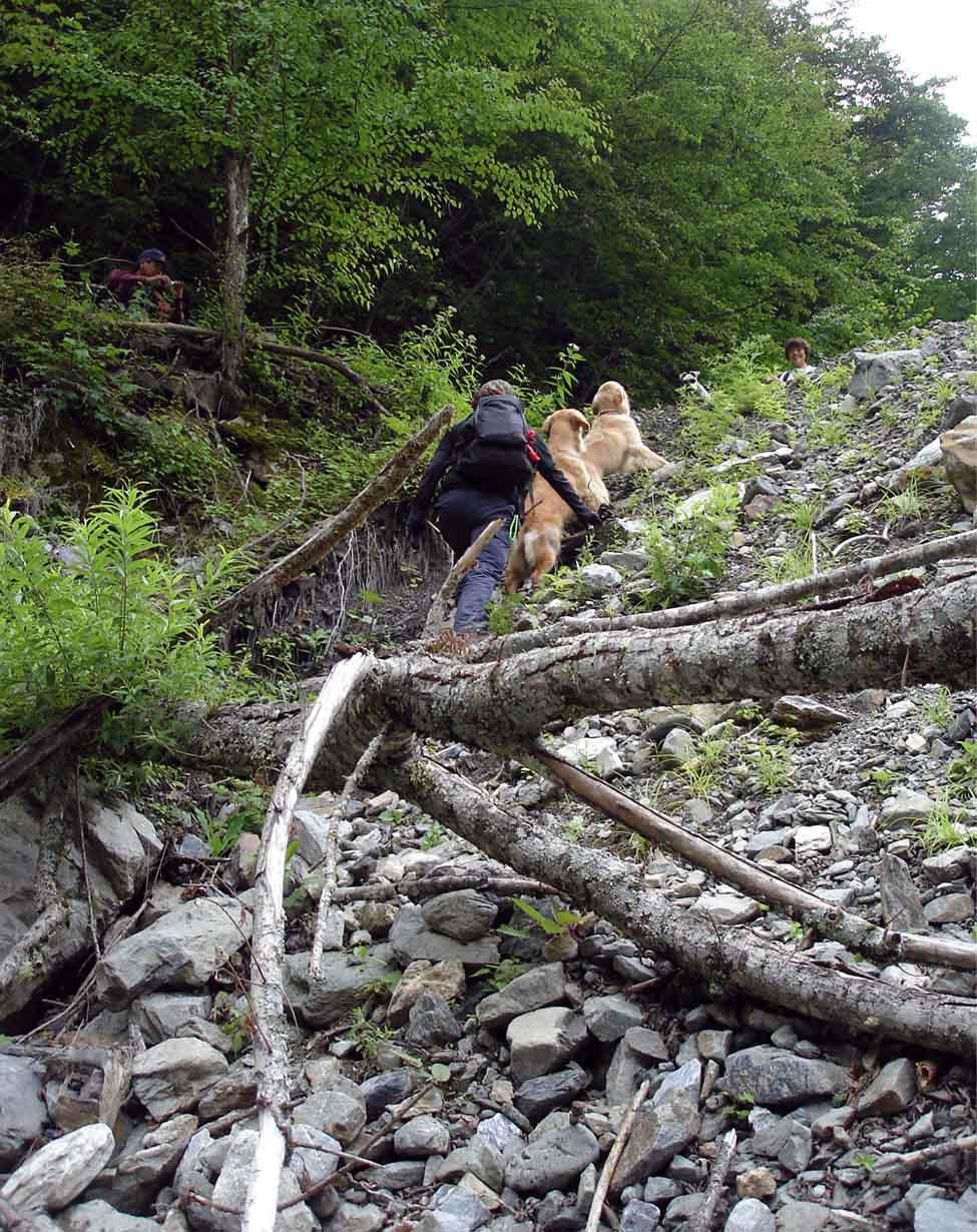 捜索訓練を終えて林道へ③縦列登り