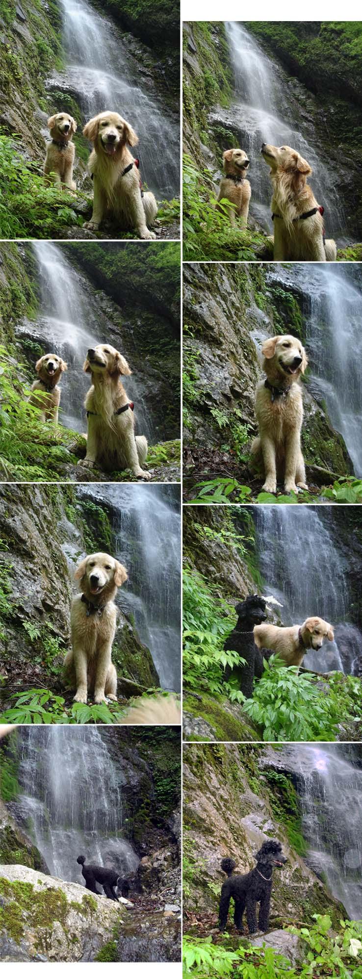 帰路の巫女滝にて(モデル犬)