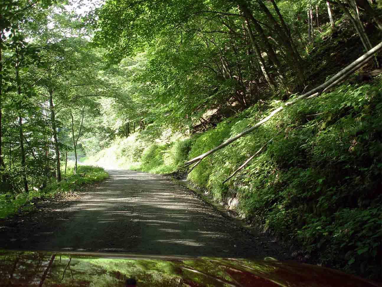 帰路の林道(昨日大雨の中切り通した倒木)
