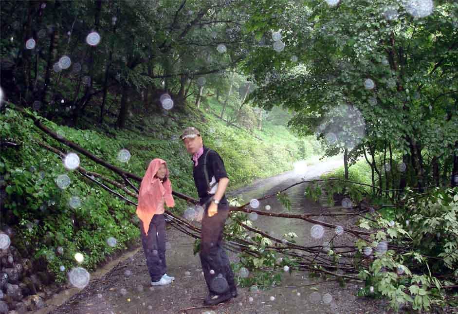 19日林道を塞ぐ倒木