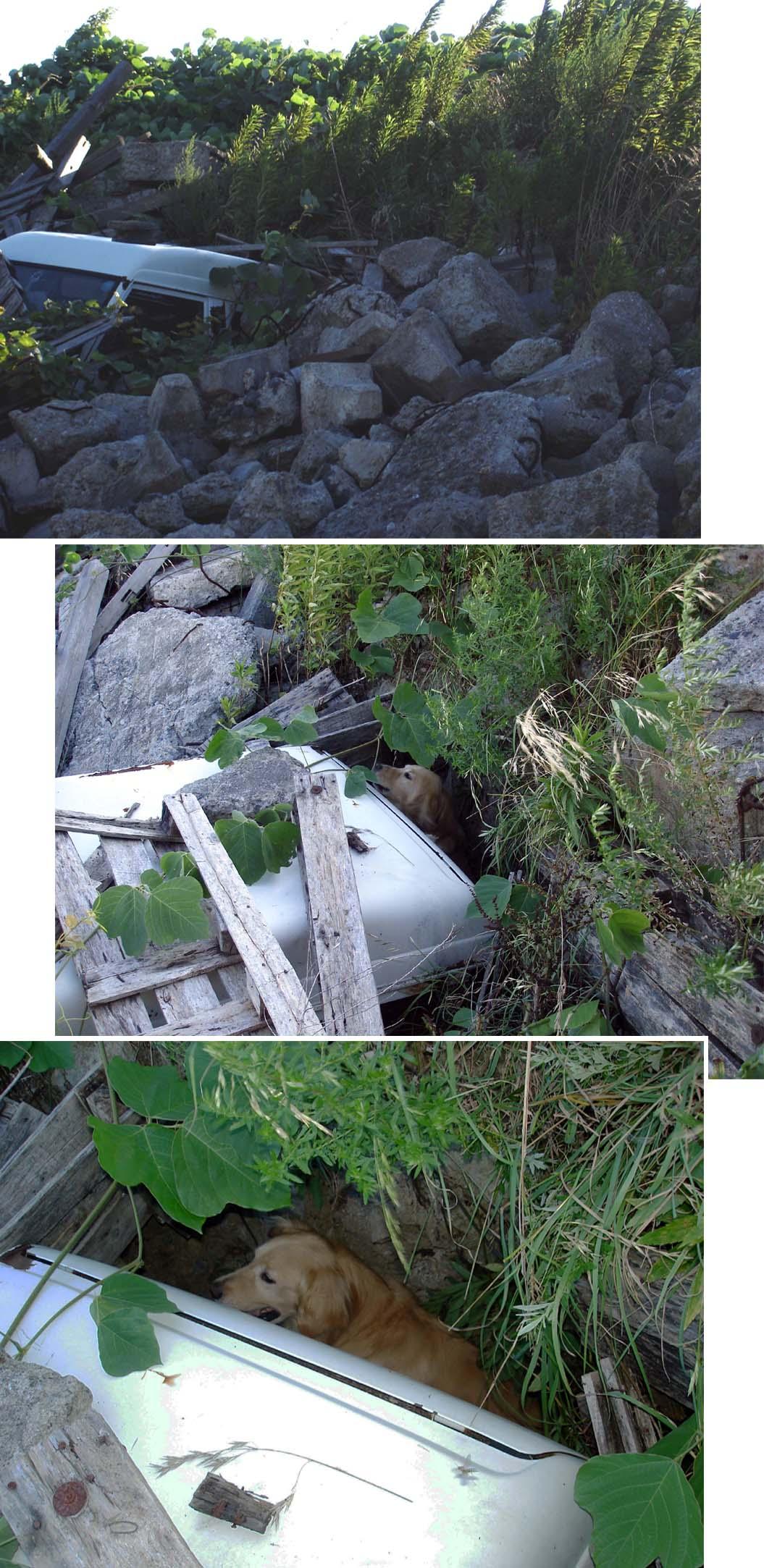 チヤンス捜索② 穴の中でアラート