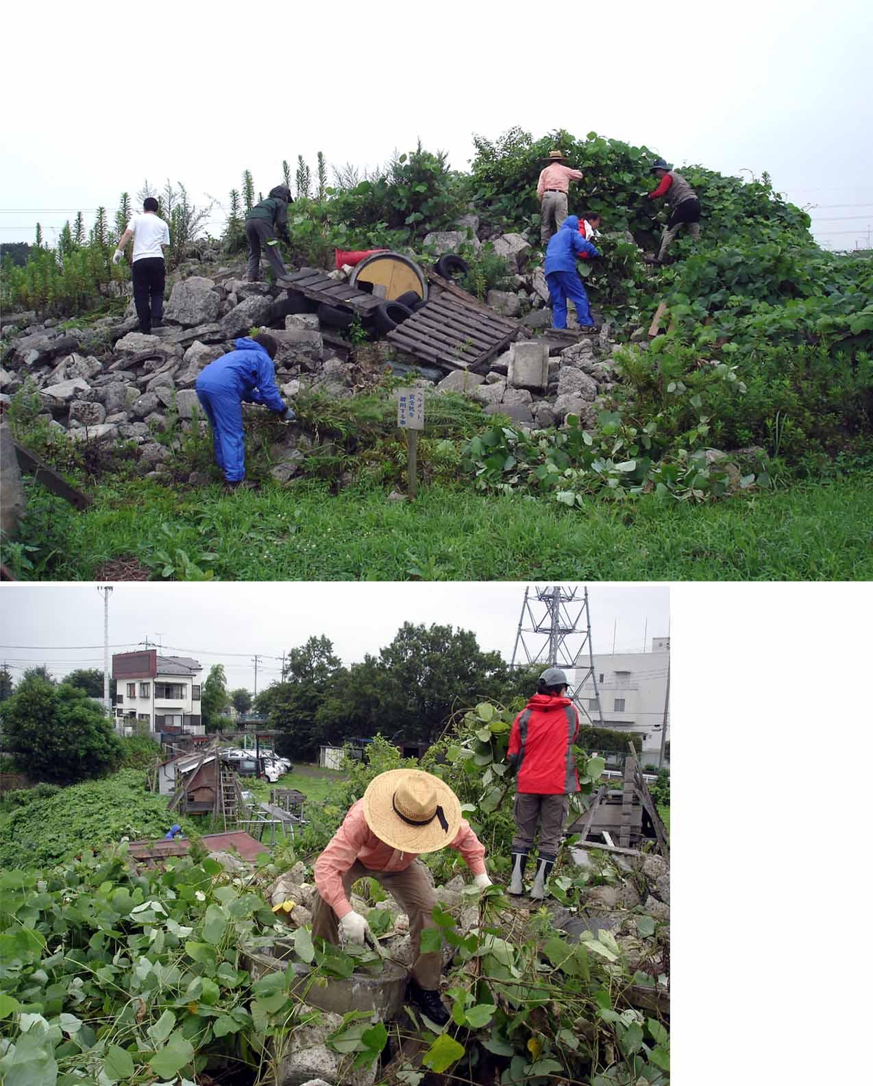 葛ツタ山の刈取り作業①